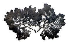 Enero. Algae 7, bronce recortado patinado en negro, 120x 117, 2011, Jan Hendrix.