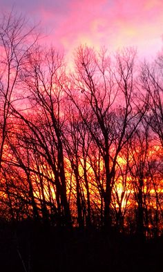 sunset, photography, sun, trees.  I took this picture with my cell phone two days after Thanksgiving 2011; Sykesville, Maryland.  It looked like the woods were on fire!  NO PHOTOSHOPPING was done on this pic!  Photo by: Sunshine E. Monk