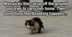 Now this picture is something else...AMAZING story!!! A cat just wanting some love and affection!!!