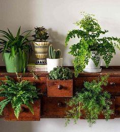 Itt a 3 varázstrükk, hogy tökéletesen egészségesek legyenek a növényeid – szupertanácsok
