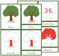 Parts of a tree - three part cards - FREE The Helpful Garden: Botany