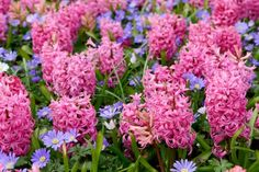 10 Fragrant Flowers For a Heavenly Smelling Garden Perfumado Lista Flores Hyacinth List Of Flowers, Summer Flowers, Colorful Flowers, Pink Flowers, Unique Flowers, Autumn Garden, Spring Garden, Planting Bulbs, Planting Flowers