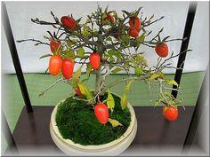 盆栽展 - Reikoのお花の絵
