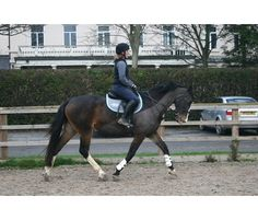 Gorgeous 16.3hh 14-year-old schoolmistress for sale | HorseDeals.co.uk