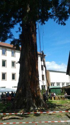 Bucherons→ élagage→ Forêt dans La Ville → Sainte-Marie-Aux-Mînes