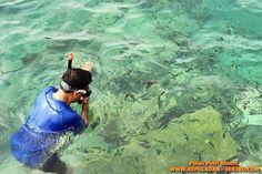 Snorkeling Di Pulau Putri Resort