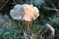Autumn turns to Winter – a photo I shot on a dawn dog walk and posted to @Felicity Mcgregor Embedded image permalink