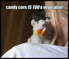 if a rattie says it, it must be true!