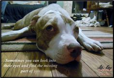 Sometimes you can look into their eyes and find the missing part of you    WWW.THEPITBULLCREW.COM