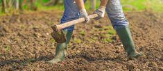 Organic agriculture improves local ecomonies.