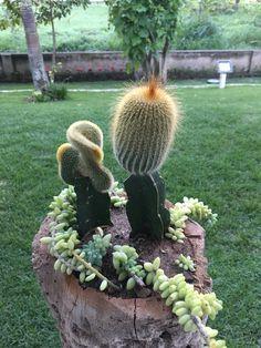 Succulents, Plants, Cactus Plants, Succulent Plants, Plant, Planets