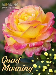 51 Good Morning Wishes With Rose - Morning Greetings – Morning Quotes And Wishes Images Latest Good Morning Images, Good Morning Images Flowers, Morning Quotes Images, Good Morning Beautiful Images, Good Morning Photos, Good Afternoon, Good Morning Good Night, Good Morning Wishes Friends, Good Morning Greetings