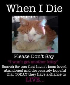 Your kitty who has crossed the Rainbow Bridge doesn't want you to be alone. Please think about adopting a new furry friend. Crazy Cat Lady, Crazy Cats, Pet Loss Grief, Cat Health, Pet Memorials, Animal Quotes, Beautiful Cats, Cat Memes, I Love Cats