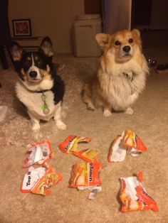 """Found: Prime Suspects in Ramen DIsappearance"" 