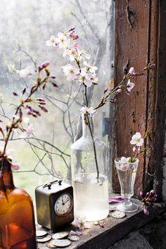 http://www.husohem.se/Tradgard/Vaxter-Blommor/Lat-varen-flytta-in-med-blommande-kvistar/