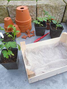 Mini-Gemüsebeet zum Verschenken - Hat man überzählige Jungpflanzen, lässt sich damit ein nettes Präsent für die nächste Einladung zu Gartenfreunden in der Nachbarschaft gestalten.