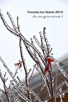 Have a experience of Ice storm in Toronto, seems close to ice age :)