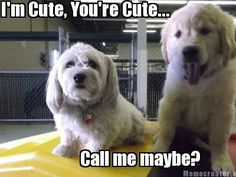 Call me maybe? The puppy is Otis, our newest Camper!