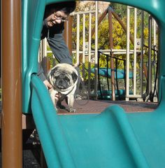 mommy helps Pugsley go down the slide.
