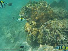 Travel Kepulauan Seribu - Wisata Pulau Seribu Jakarta