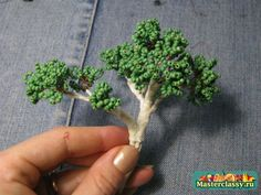 Bonsai own hands