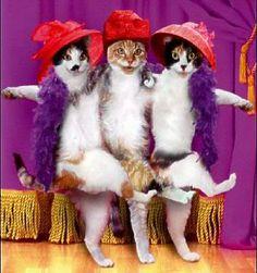 #dancing#cats