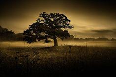 One Tree Hill on a foggy sunrise morning Dane County Wisconsin U