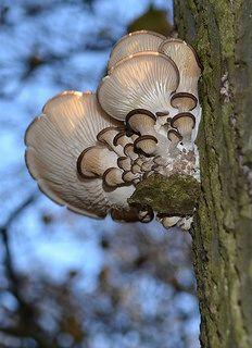 Mushroom Heart by pörröinen kana Heart In Nature, Heart Art, I Love Heart, Happy Heart, Wild Mushrooms, Stuffed Mushrooms, Tree Mushrooms, Slime Mould, Mushroom Fungi