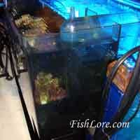 How to set up a refugium using an Aquaclear power filter. Easy, cheap and effective. Salt And Water, Fresh Water, Marine Fish, Saltwater Aquarium, Aquariums, Filter, Tropical, Passion, Projects
