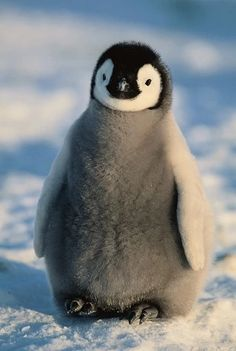 35 Funny Furry Animals To Brighten Your Day Funny animals,cute animals,baby animals Baby Animals Pictures, Cute Animal Pictures, Animal Pics, Pictures Of Penguins, Images Of Animals, Silly Pictures, Cute Little Animals, Cute Funny Animals, Baby Animals Super Cute