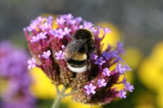 flauschige Biene Foto by Darahkiin