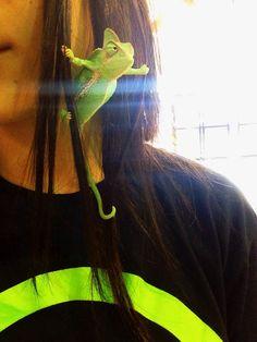 I. Have. Awoken. #lizard #reptile Neon green chameleon