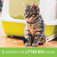 Litter box problems are common, and for the most part, easily solved.