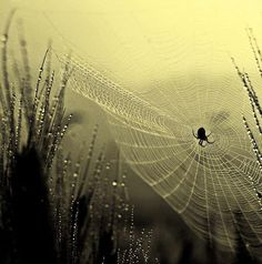 .Even the little spider that God has created is an artist. I can't make a web ! Can You ?