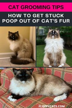 Cat poop stuck in fur is not a natural problem for cats. Cats' systems are actually designed to poop properly without getting any cat dingleberries stuck in their fur. However, it is not a rare sight in household cats, especially if they have long fur. If this happens on a single occasion, then all you need to do is take out the poop from the cat's fur. We are going to tell you how to do that in this article. Click to learn why your cat is getting poop stuck in their fur and what you can do. Cat Shampoo, Long Haired Cats, Outdoor Cats, Cat Grooming, Cat Health, Litter Box, Cat Gif, Household Tips, Cool Cats