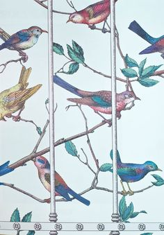 Uccelli Wallpaper A stunning collections of beautifully brightly coloured birds on a palest duck egg background, sitting on branches, behind a cage.