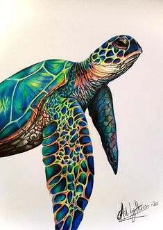 Sea Turtle Painting, Sea Turtle Art, Sea Turtles, Baby Turtles, Sea Turtle Drawings, Sea Turtle Tattoos, Mandala Turtle, Animal Drawings, Art Drawings