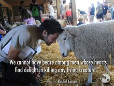 """""""We cannot have peace among men whose hearts find delight in killing any living creature."""" ~ courtesy Rachel Carson, renowned author of the book Silent Spring Rachel Carson, Vegan Quotes, Why Vegan, Stop Animal Cruelty, Vegan Animals, Animal Welfare, Animal Agriculture, Animal Rights, Vegan Life"""