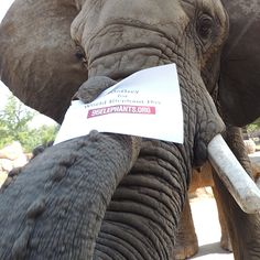 #GoGrey for World Elephant Day 96ELEPHANTS.ORG