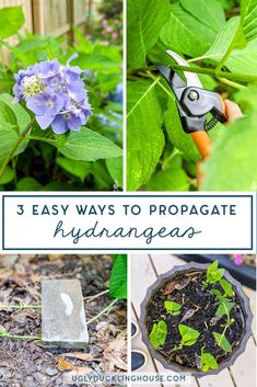There are multiple methods to propagate hydrangeas: cuttings, weighing down a branch, and water method. This guide shows you how to do all Outdoor Plants, Garden Plants, Box Garden, Roses Garden, Garden Bed, Shade Garden, Outdoor Spaces, Garden Tools, Garden Ideas