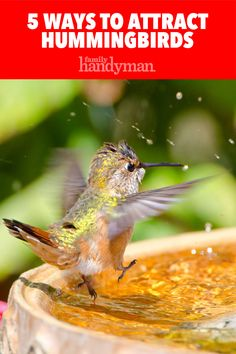 What's the relationship between spiderwebs and hummingbirds? Find out with these 5 tips to help you attract hummingbirds to your yard. Hummingbird Habitat, Hummingbird Bird Bath, Hummingbird Plants, How To Attract Hummingbirds, How To Attract Birds, Attracting Hummingbirds, Humming Bird Feeders, Humming Birds, Humming Bird Bath