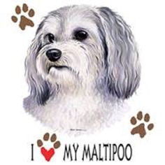 A personal favorite from my Etsy shop https://www.etsy.com/listing/231761575/i-love-my-maltipoo-t-shirt-womens-cutsm