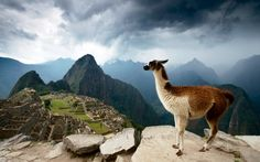 Machu Picchu, Peru A llama's-eye view of the legendary Inca settlement at Machu Picchu, isolated high in the Peruvian Andes. The world's most desirable holiday destinations – in pictures Alpacas, National Geographic, Peru Vacation, Peru Beaches, Machu Picchu Tours, Peru Travel, Inca, Travel Companies, Holiday Destinations