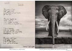 An eight year old's poem written in memory of Igor the Elephant, photographed by Nick Brandt in 2007, killed by poachers, 2009.)  My name is Igor, I am forty-nine. I have lived in East Africa All this time. My mum taught me Where water is And I taught my child So he could one day teach his. I live in harmony With our beautiful world, But bad men saw only money, Disregarding my soul. My name WAS Igor, I was forty-nine. I died in East Africa And more die all the time.  - Samuel Cull-Lapaire