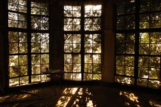 window, indoors, architecture, built structure, glass - material, tree, transparent, house, home interior, sunlight, day, no people, wood - material, growth, plant, building exterior, closed, window frame, curtain, door