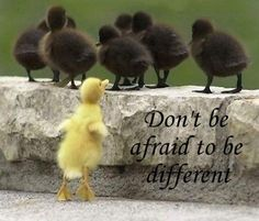 Don't be afraid to be different...
