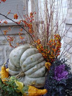 Miscanthus Graziella American Bittersweet cut stems Pumpkin Queen Annes Lace Assorted Gourds Kale Red Peacock Euphorbia Ascot Rainbow The Lancaster Direct Mount Window Bo. Container Plants, Container Gardening, Container Flowers, Vegetable Gardening, Plant Design, Garden Design, Ascot, Outside Fall Decorations, Thanksgiving Decorations