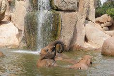 Elefante en Bioparc- Valencia
