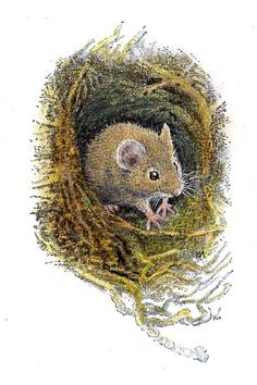 Dormouse in his nest by Inga Moore