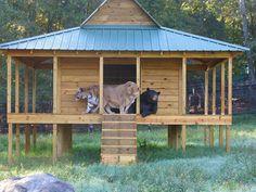 Amitié animaux lion, ours et tigre